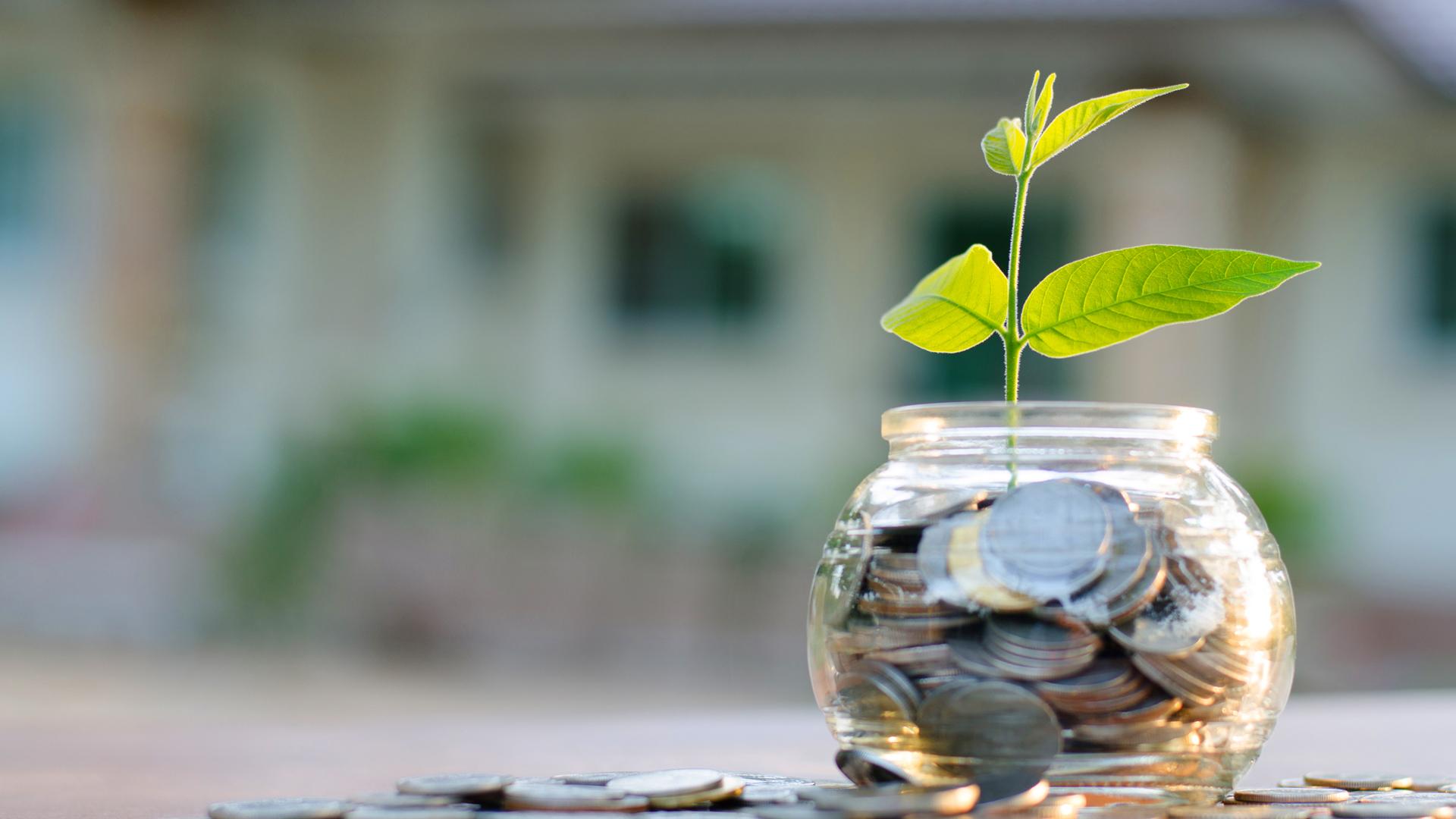 Coins plant pot